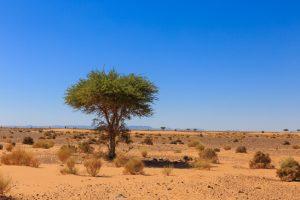 the Sahara desert adventure trip
