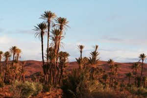 Moroccan landscapes draa valley