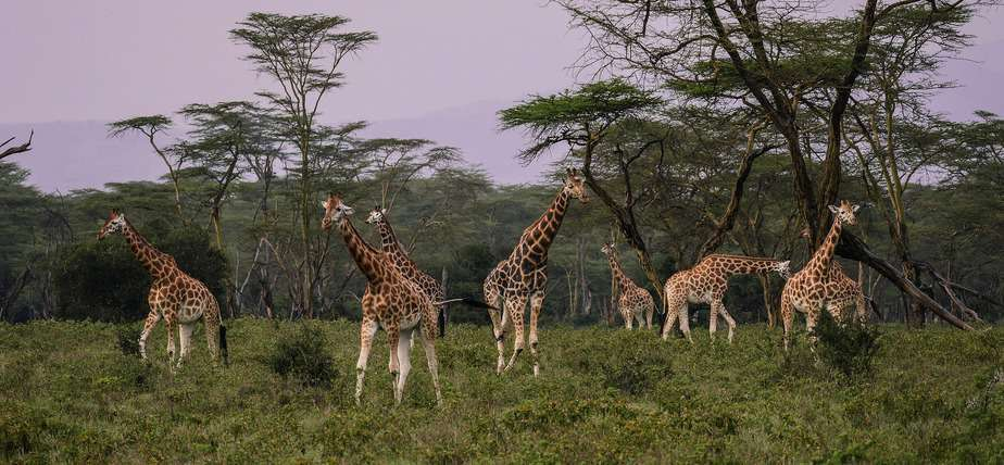 Best Time to Go On a Game Safari kenya